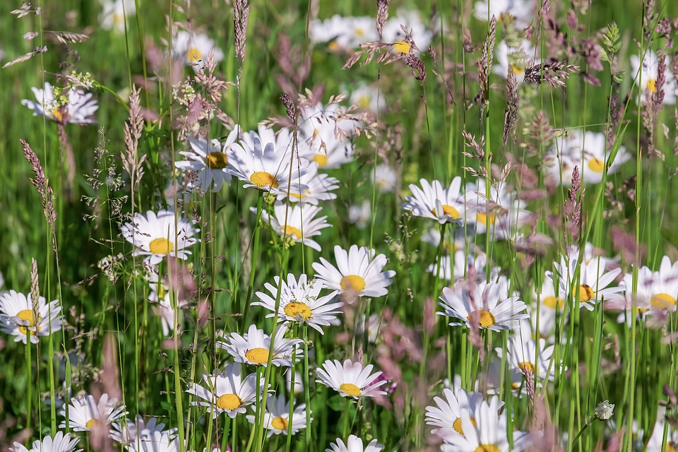 National Guidelines to Increase Flowers and Pollinators along Road Verges